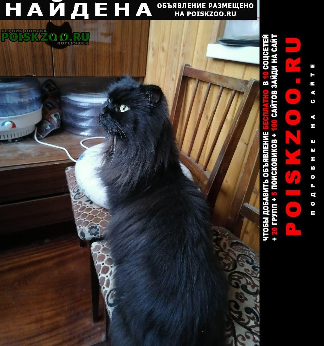 Найдена кошка чёрная, вислоухая Балашиха