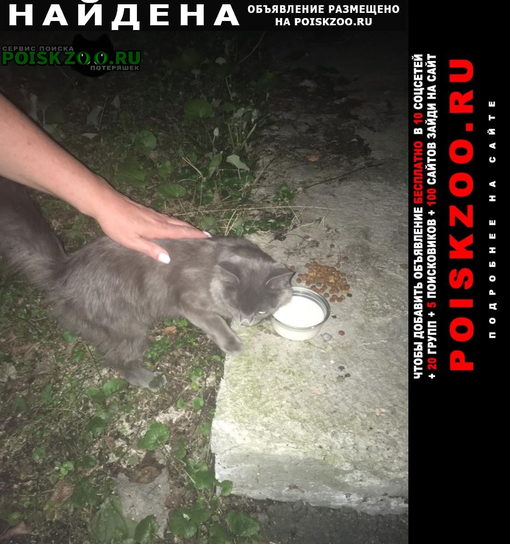 Найден кот серый Екатеринбург
