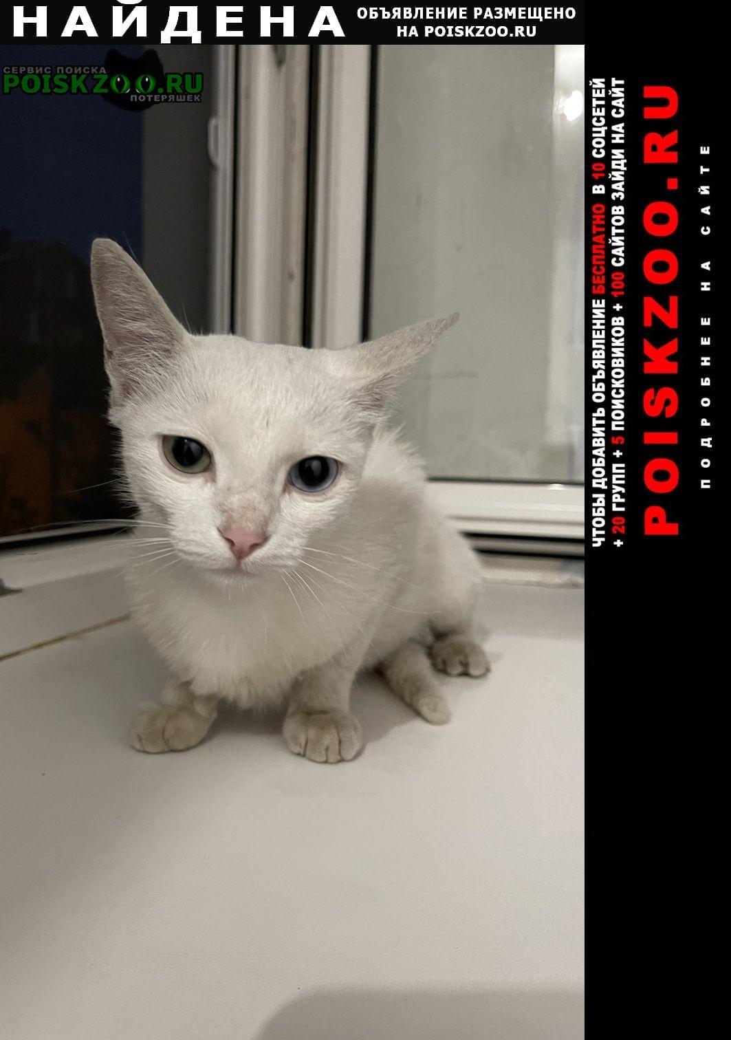 Найдена кошка белая с глазами разного цвета Воронеж