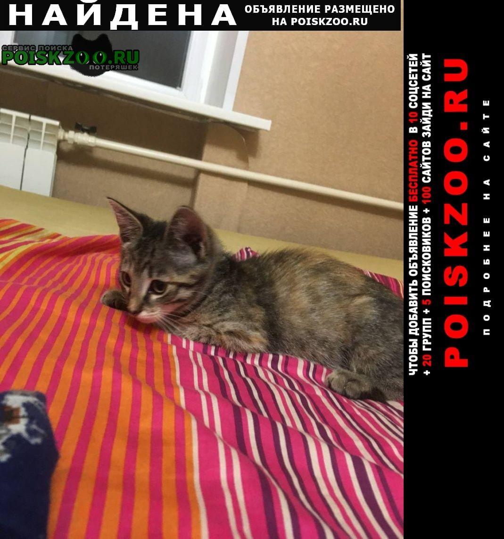 Найдена кошка котенок Москва