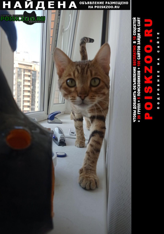 Найден кот бенгал Санкт-Петербург