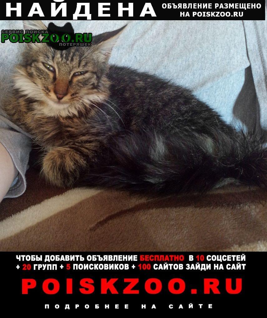 Найдена кошка Новокузнецк