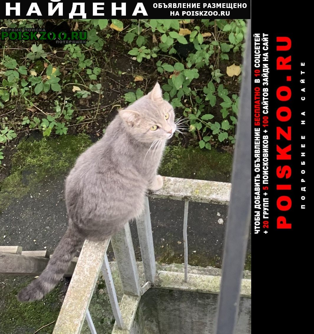 Найден кот Москва