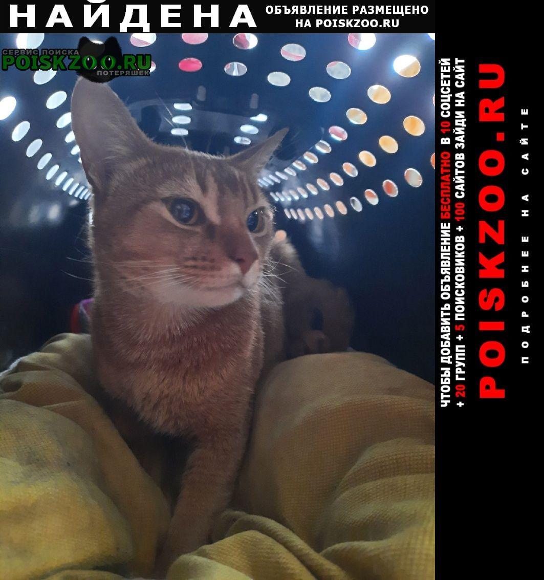 Найдена кошка породистая в е Магнитогорск