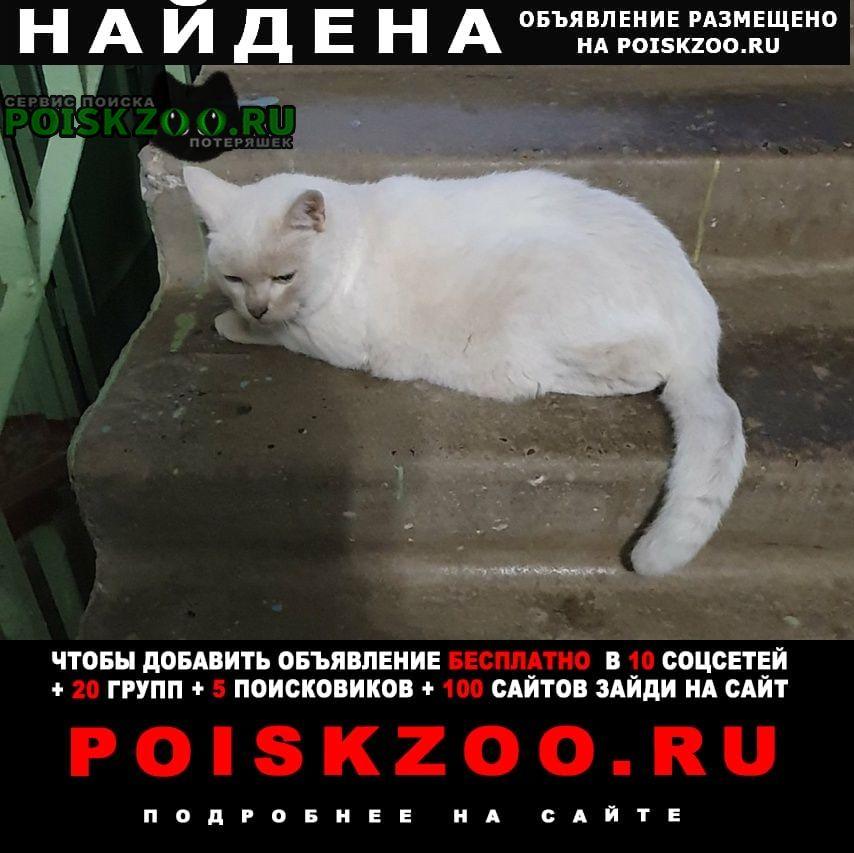 Найдена кошка белый кот Нижний Новгород