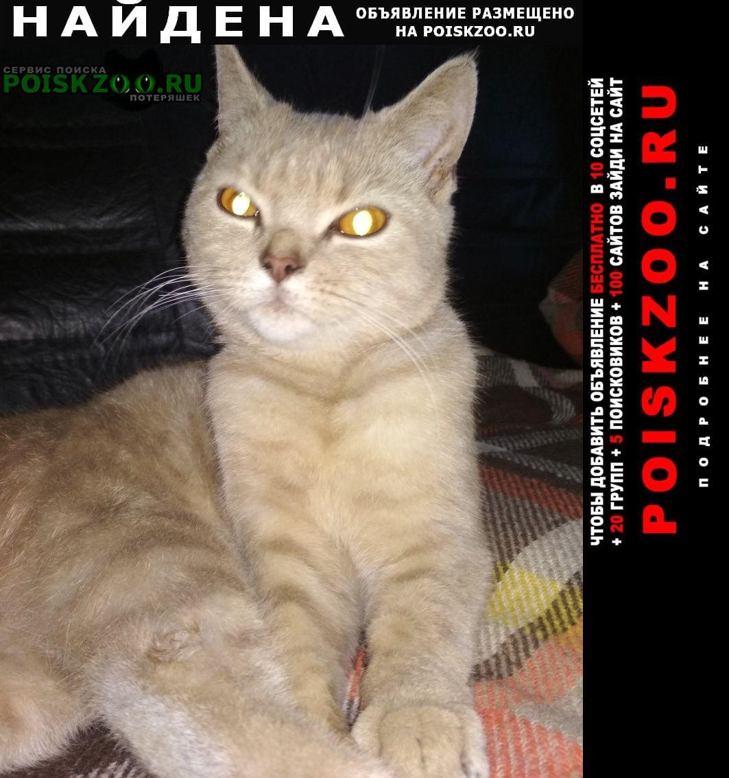 Найден кот Дедовск