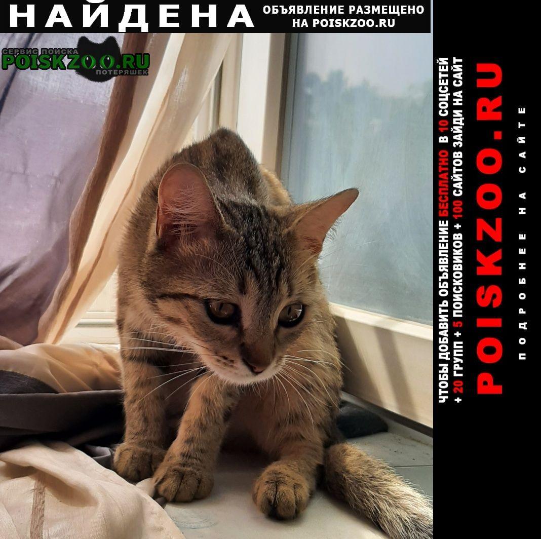 Найдена кошка отдадим в добрые руки или хозяину Волгоград