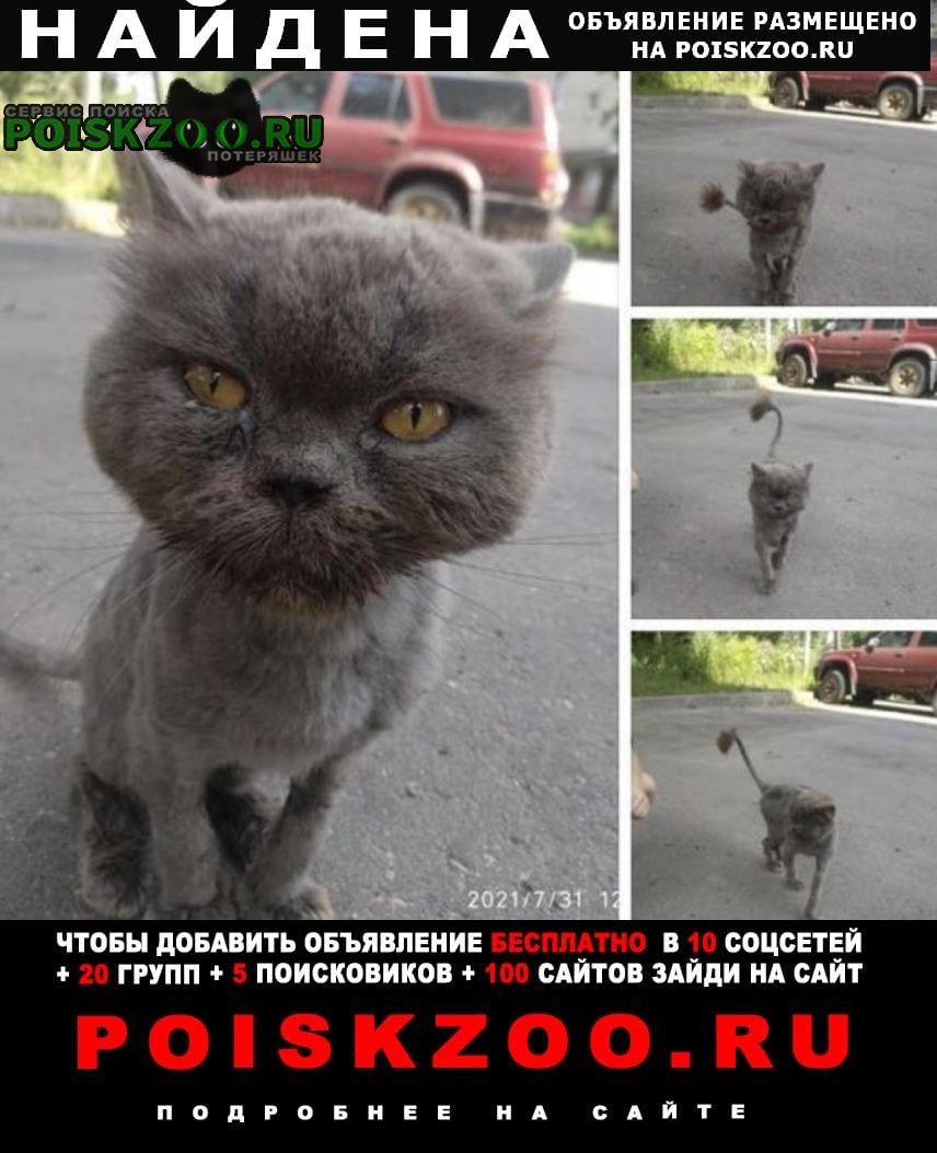 Найдена кошка кот британец Москва