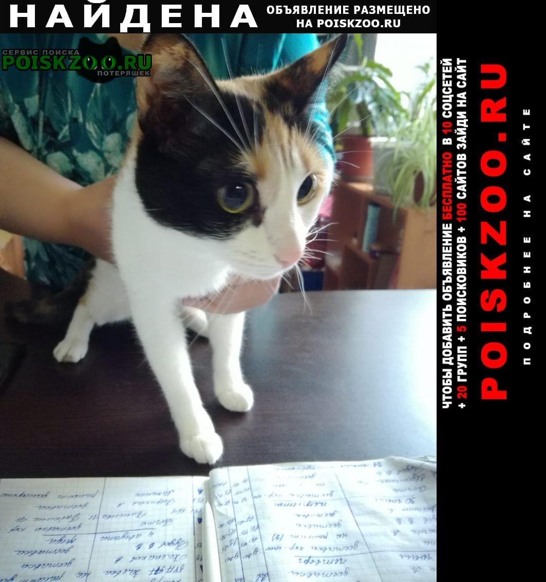 Найдена кошка -трёхцветка. переделкино Москва