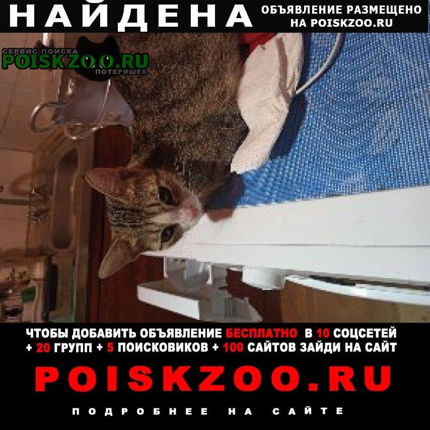 Найдена кошка метро коломенская Москва
