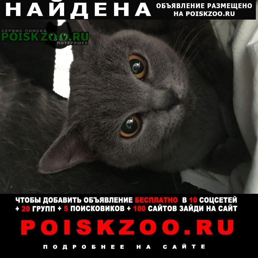Найдена кошка девочка, возраст 1-1, 5 года Москва