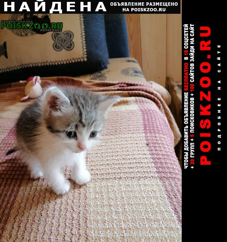 Найден котёнок Бронницы