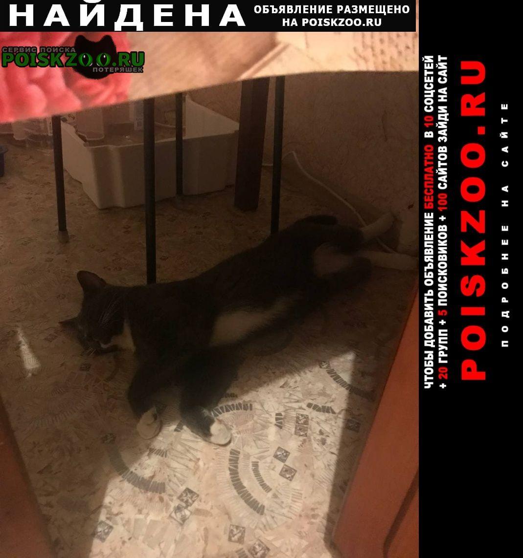 Найден кот Хабаровск