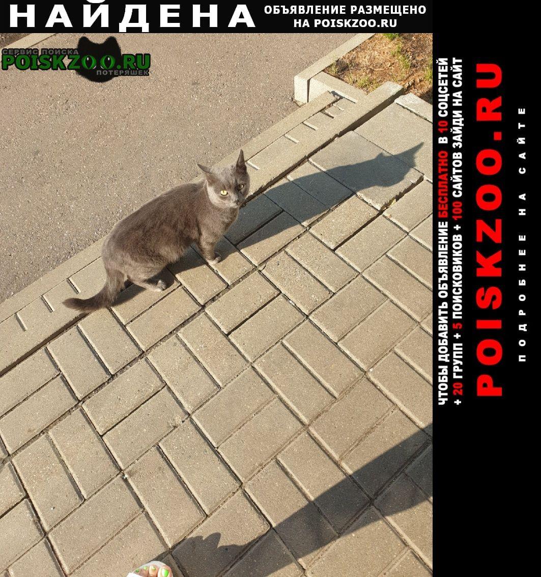Найден кот Ярославль
