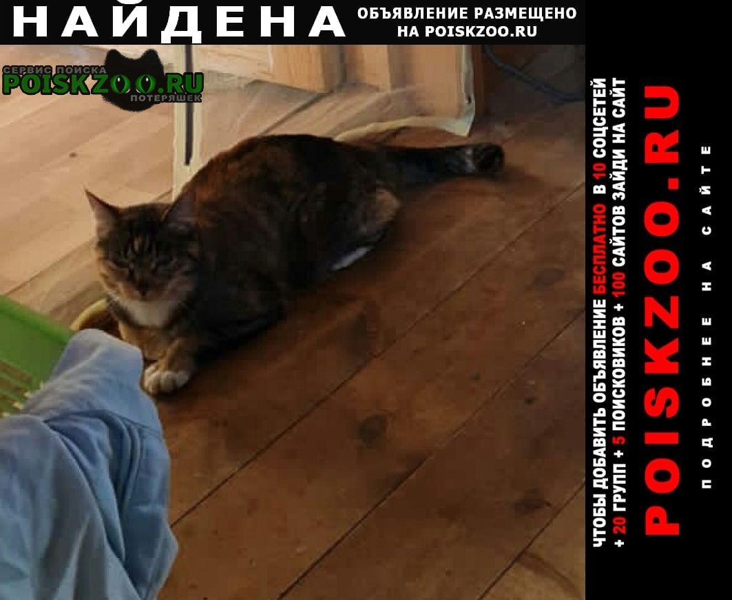 Найдена кошка прибился рыжий кот или Солнечногорск