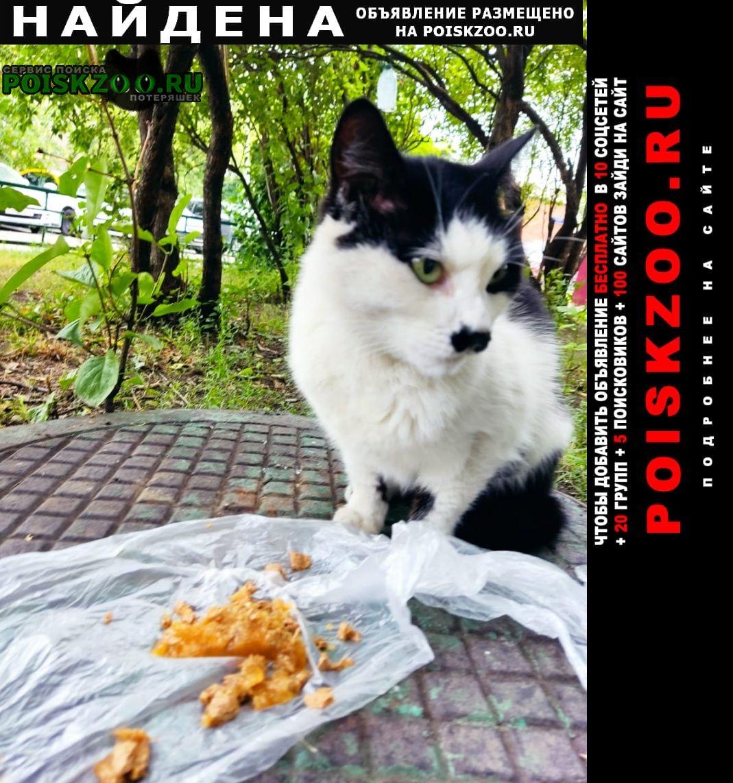 Найдена кошка в москве по щёлковскому шоссе к дому 4, Москва