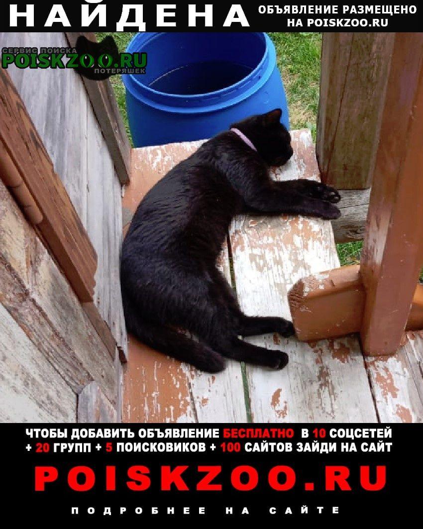 Найден кот черный, 20км от города Осташков