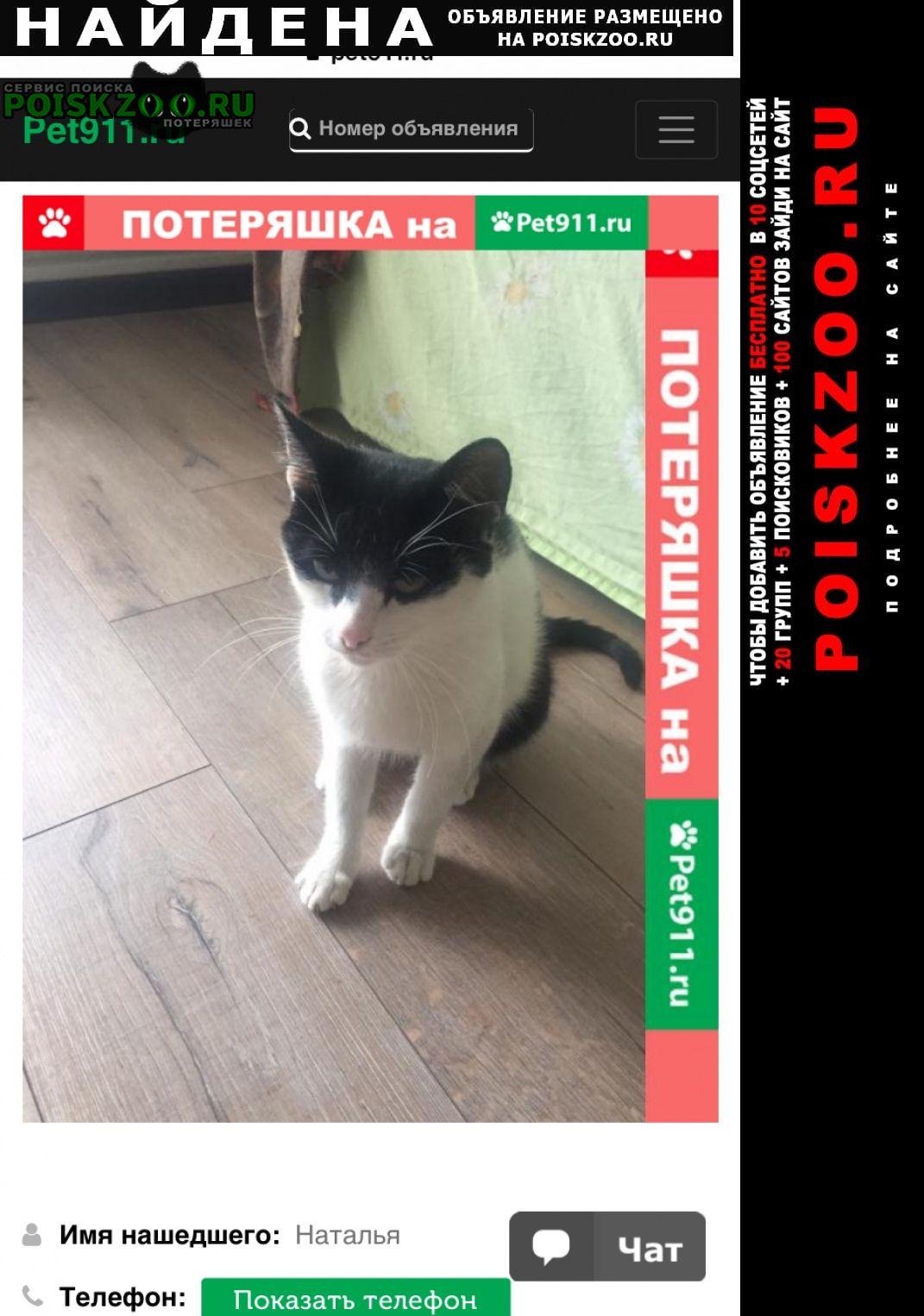 Найден кот в коммунарке Москва