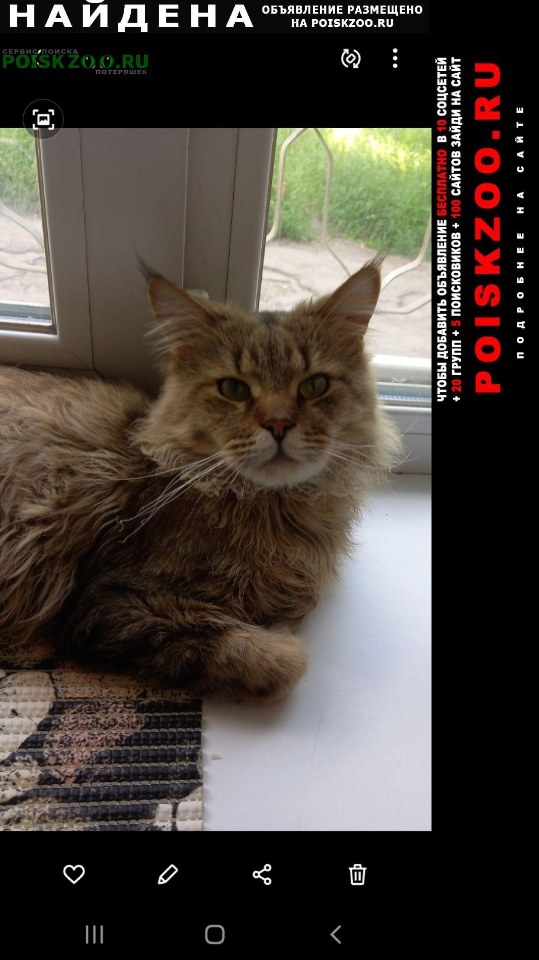 Найден кот сломана задняя лапа Ангарск