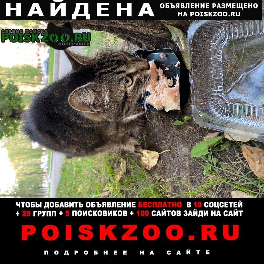Найдена кошка красный ошейник, м. академическая (юзао) Москва