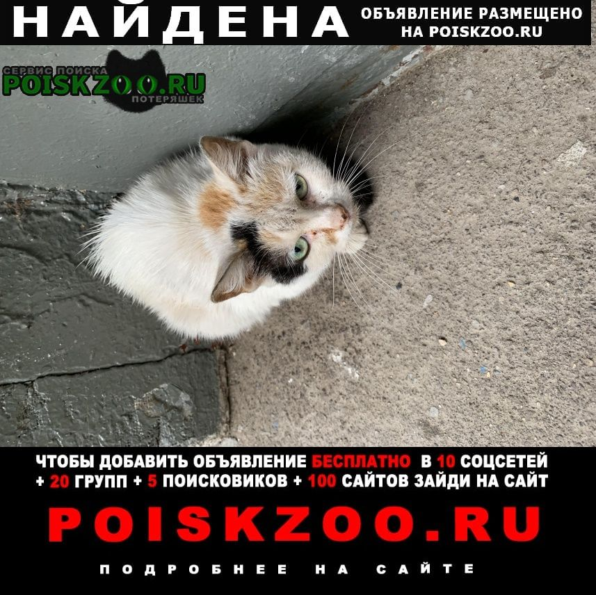 Найдена кошка район восточное измайлово Москва