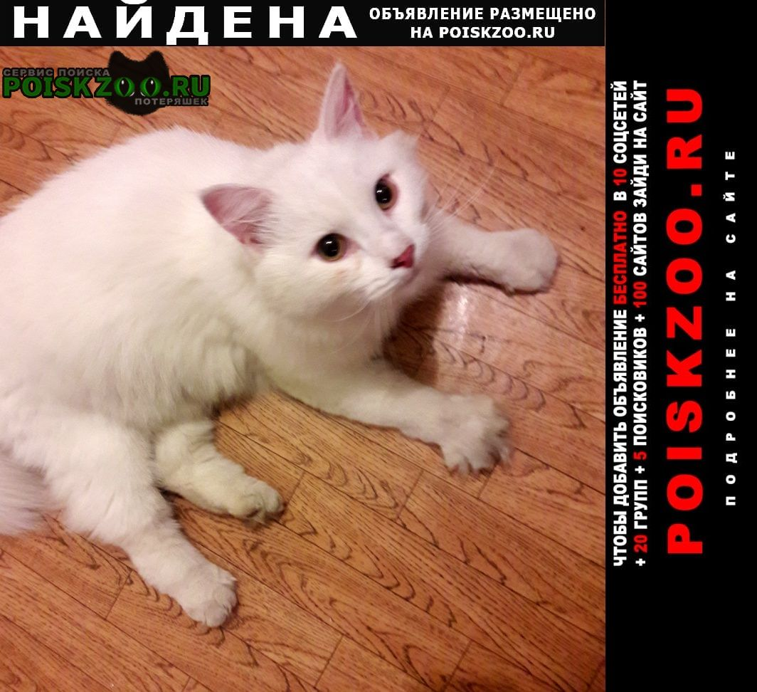 Найден кот большой белый пушистый Нижний Новгород