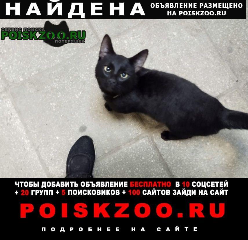 Найден кот чёрный с белым галстуком Москва