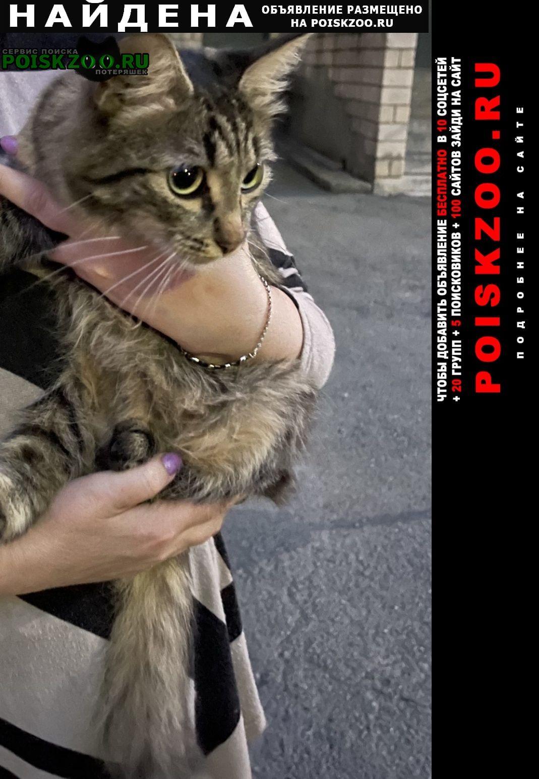 Найдена кошка котёнок Ижевск