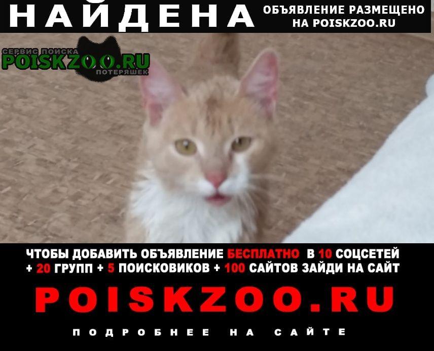 Найден кот Красноярск