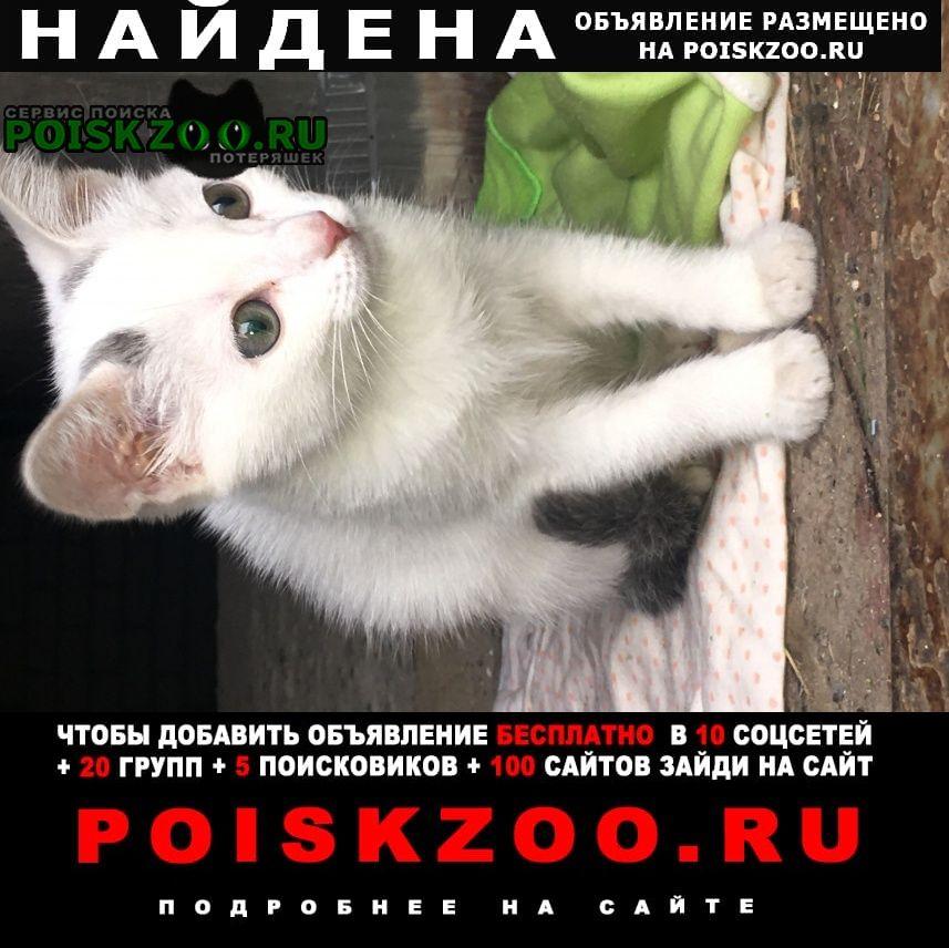 Найдена кошка котёнок (девочка) Пенза