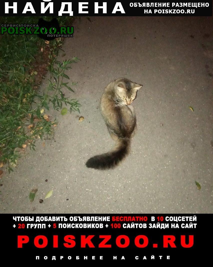Найдена кошка в красном ошейнике, домашняя Москва