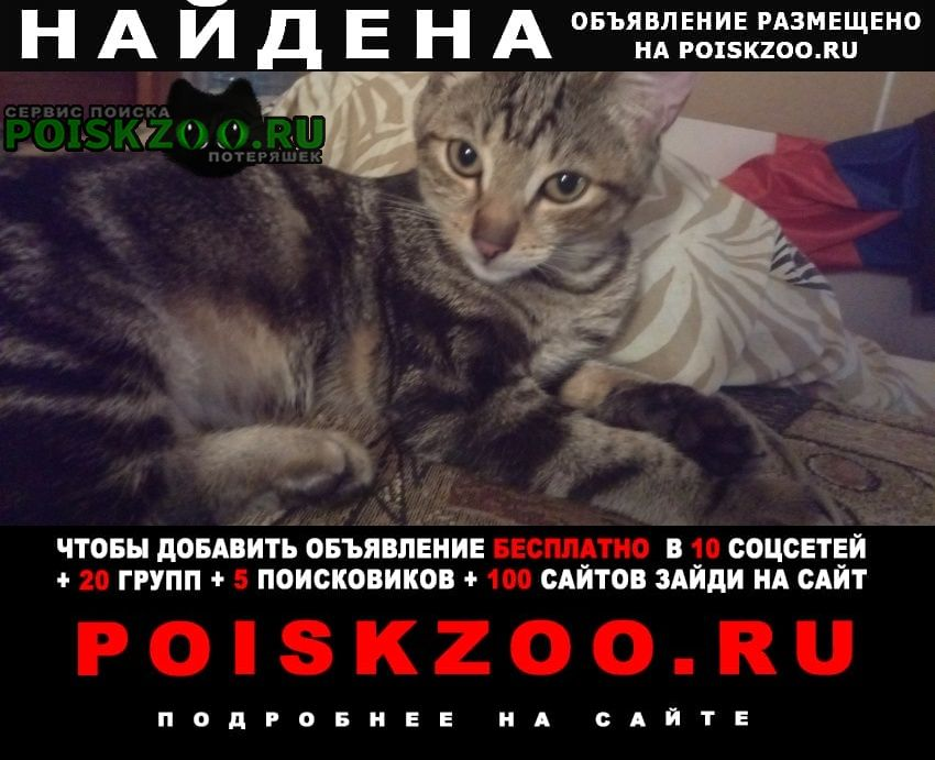 Найден котёнок бенгал Воскресенск
