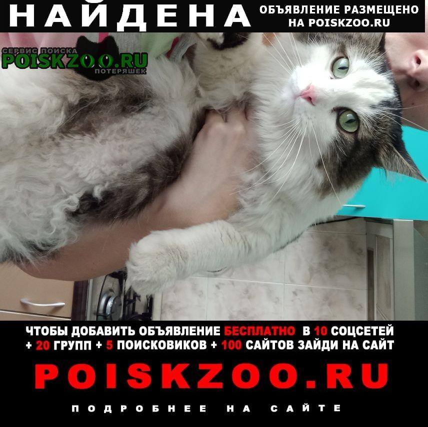 Найдена кошка пушистый крупный Москва