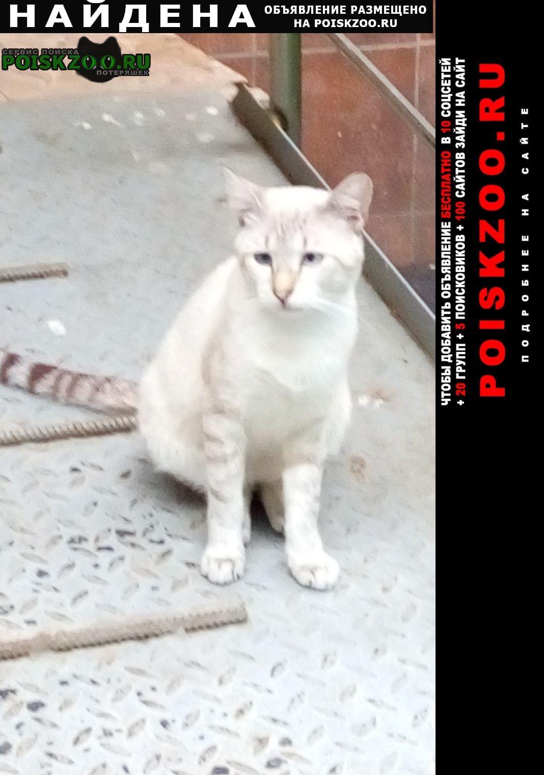Найден кот фмр Краснодар
