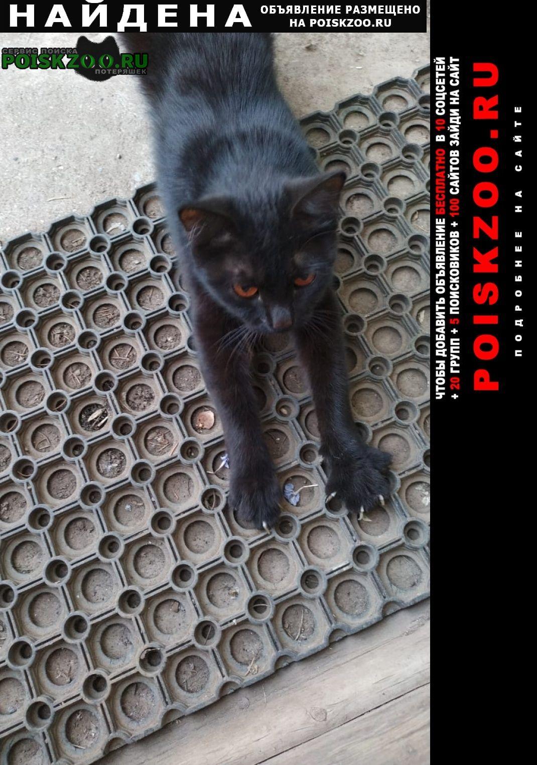Найдена кошка черная кошечка, около года Уфа
