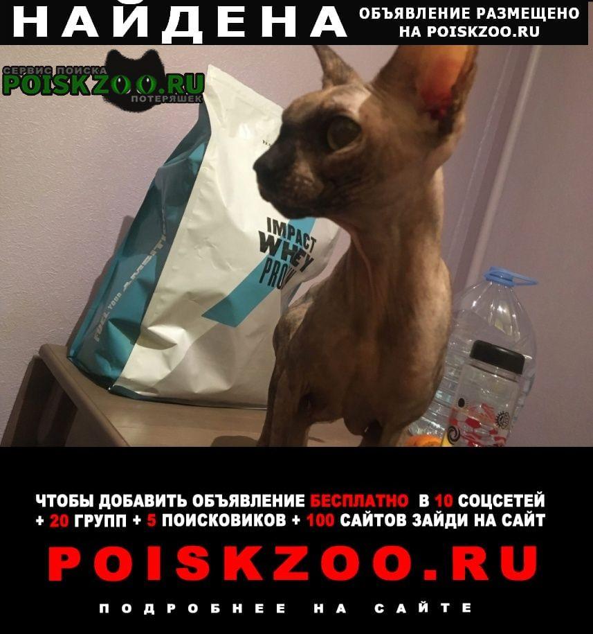 Найдена кошка сфинкс Москва