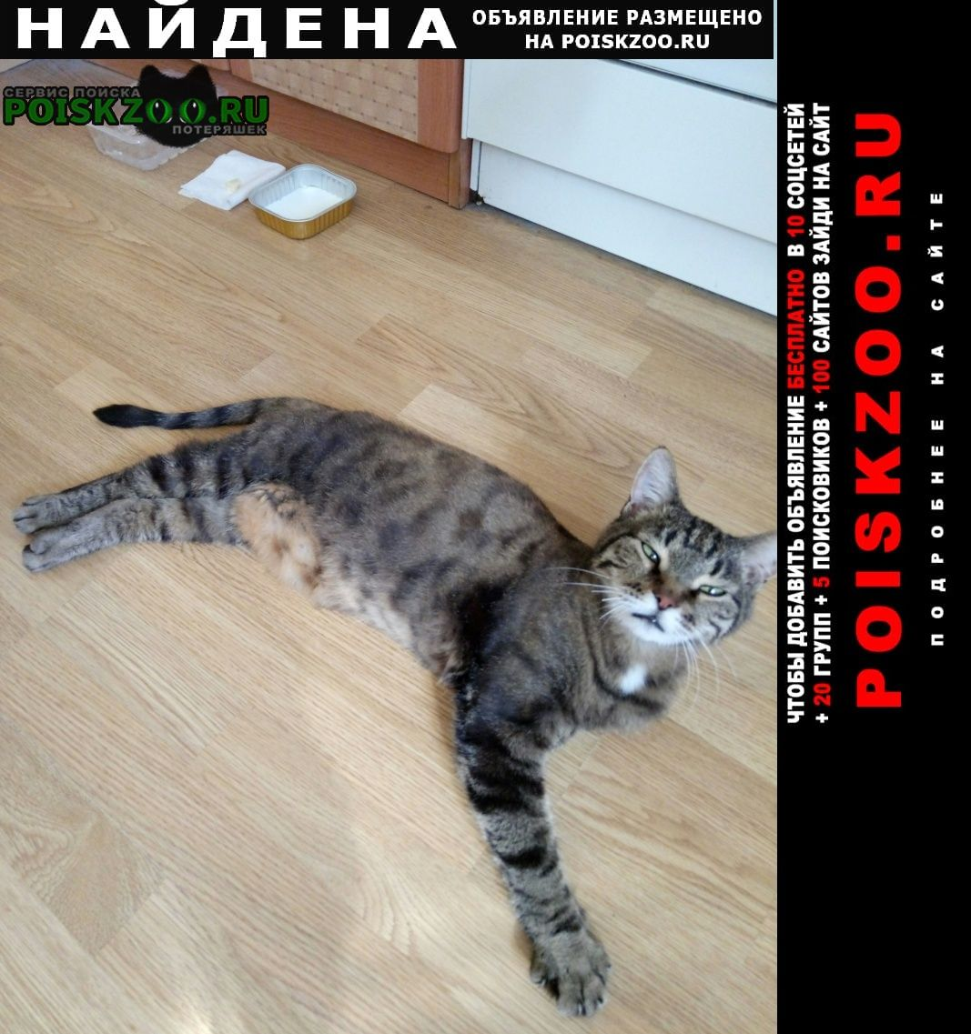 Найден кот на ул. беловежская Москва