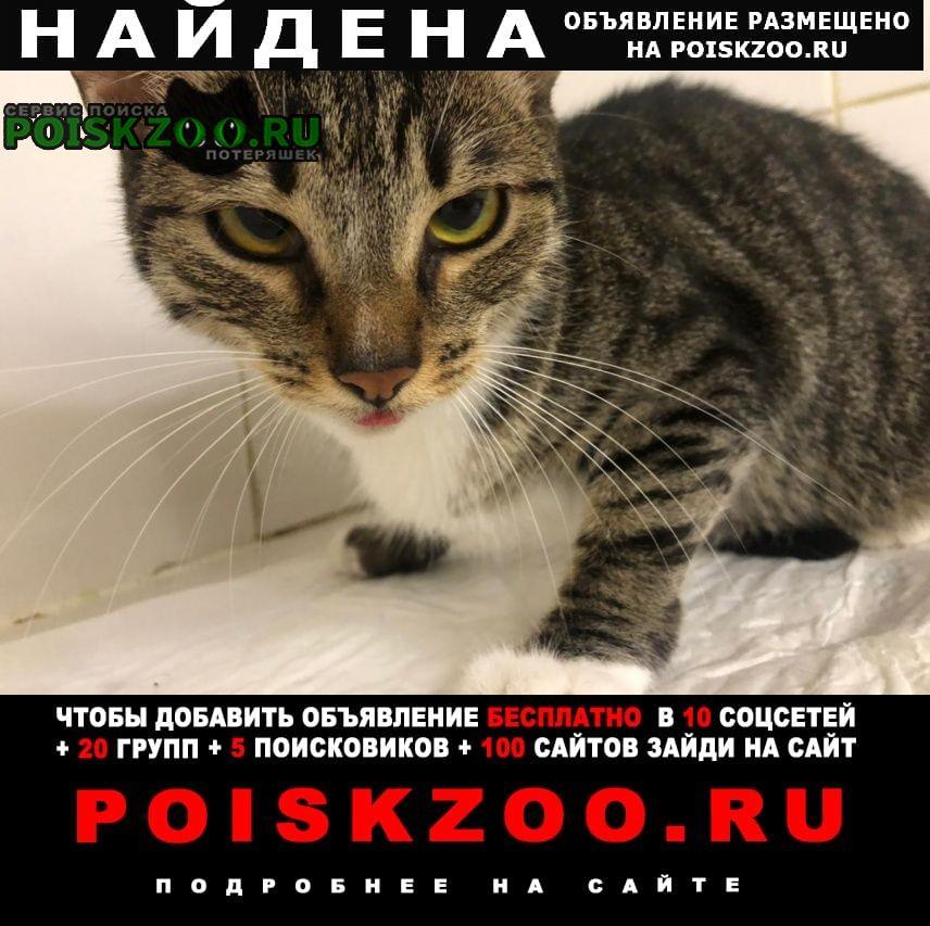 Найдена кошка район можайский Москва