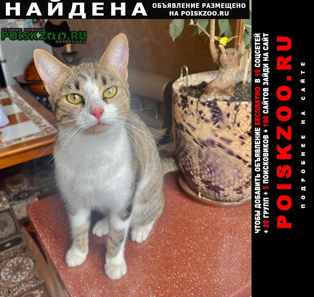 Найдена кошка в москве Москва