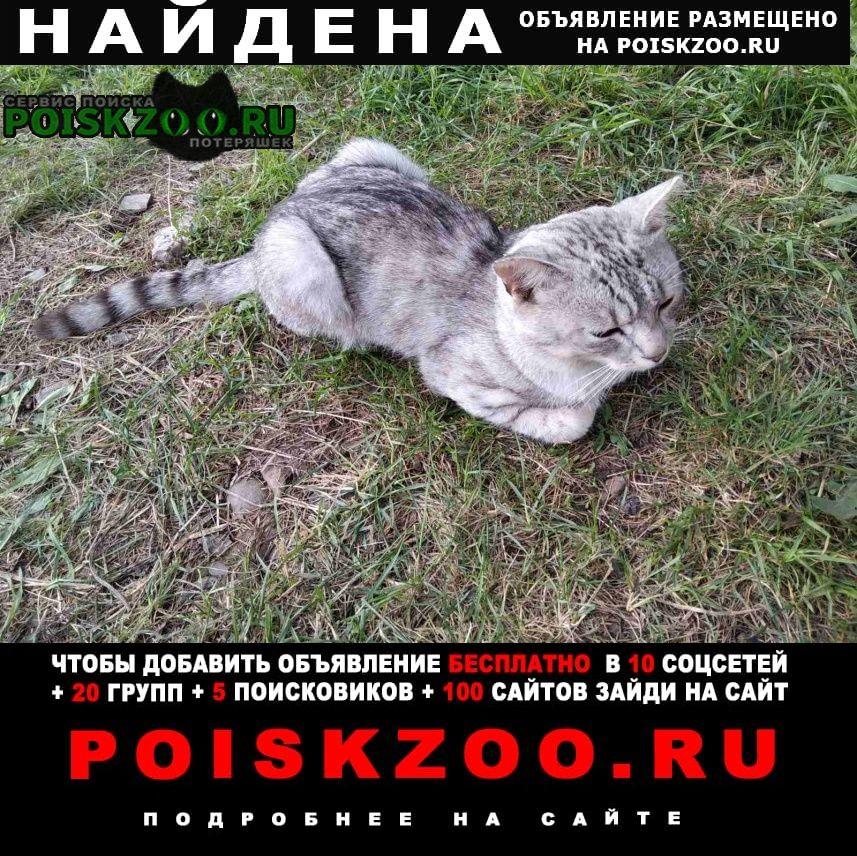 Найден кот колягино, снт верба, мальчик Красноярск