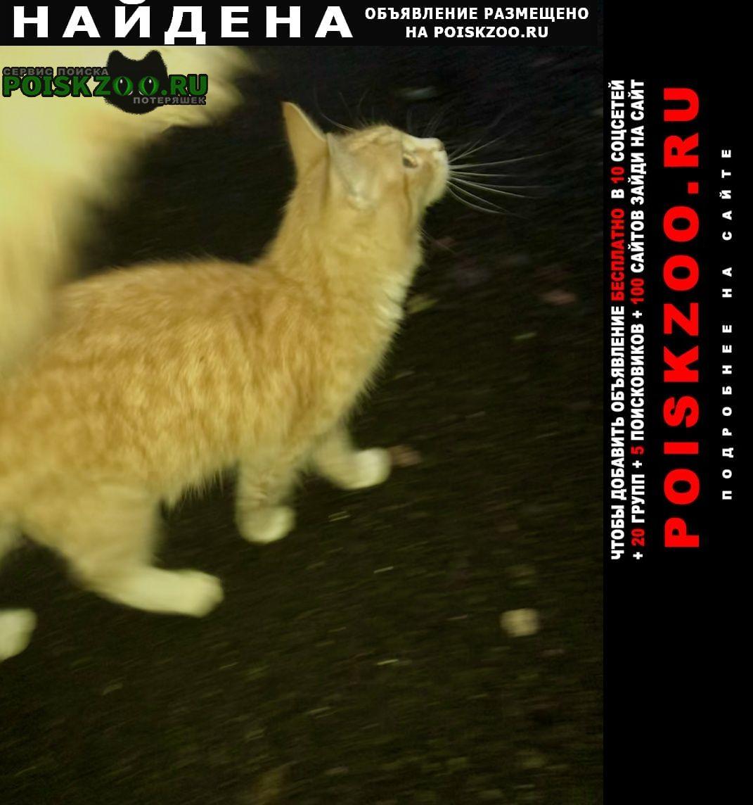 Найдена кошка рыжий котёнок-подросток Москва