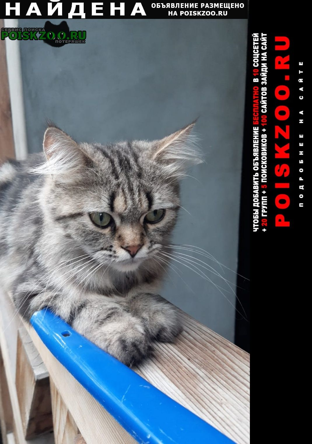 Найдена кошка 17 августа приблудилась кошечка, чистая Кисловодск