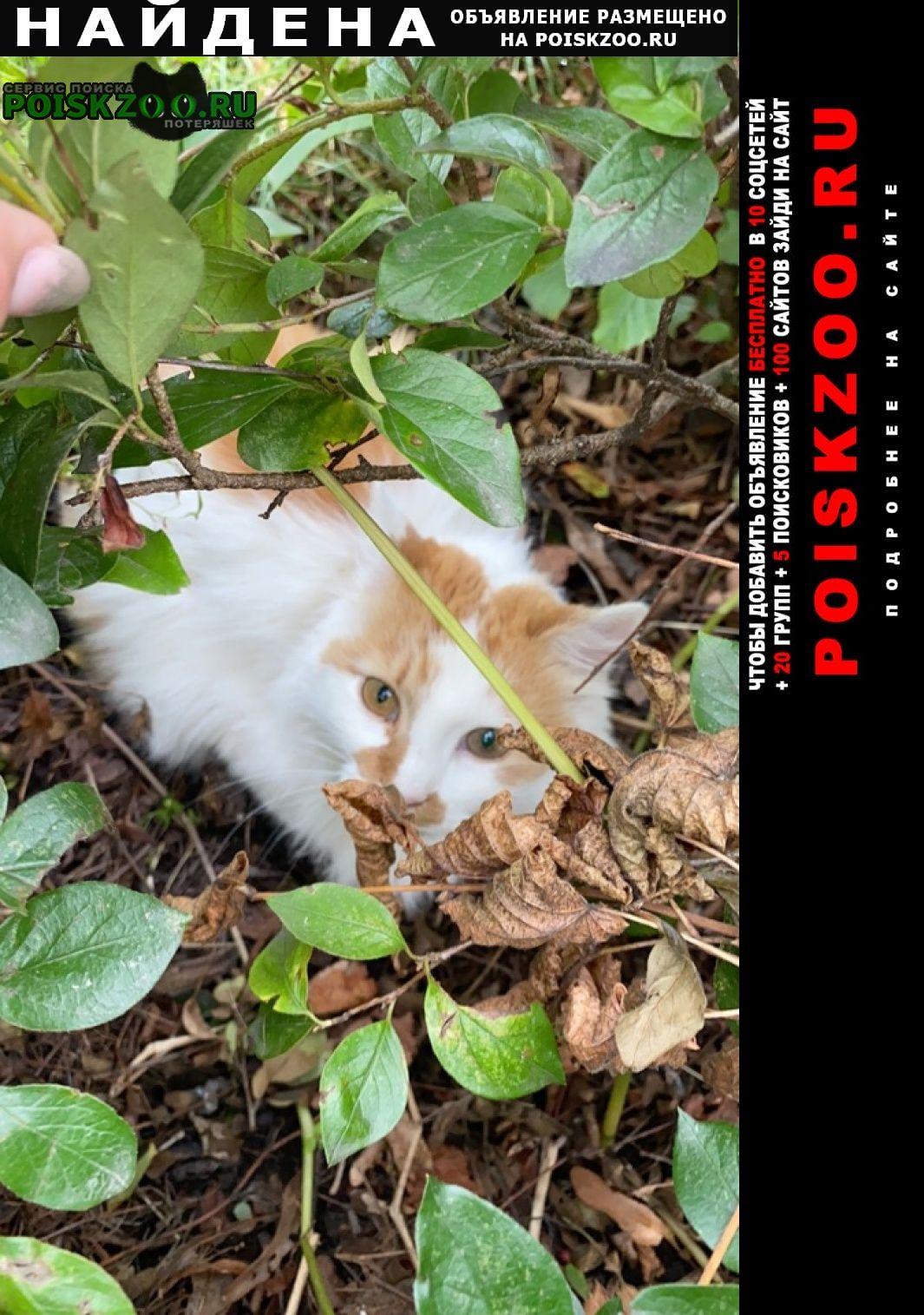 Найдена кошка 9 утра 21 августа возле 2 ладей в кустах Выборг