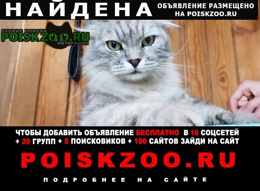 Найдена кошка очень спокойная Владимир