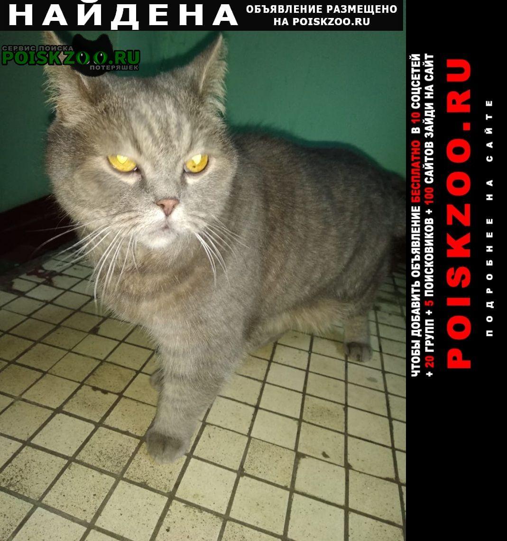 Найдена кошка метро беляево, ул. введенского. д.20, к1 Москва