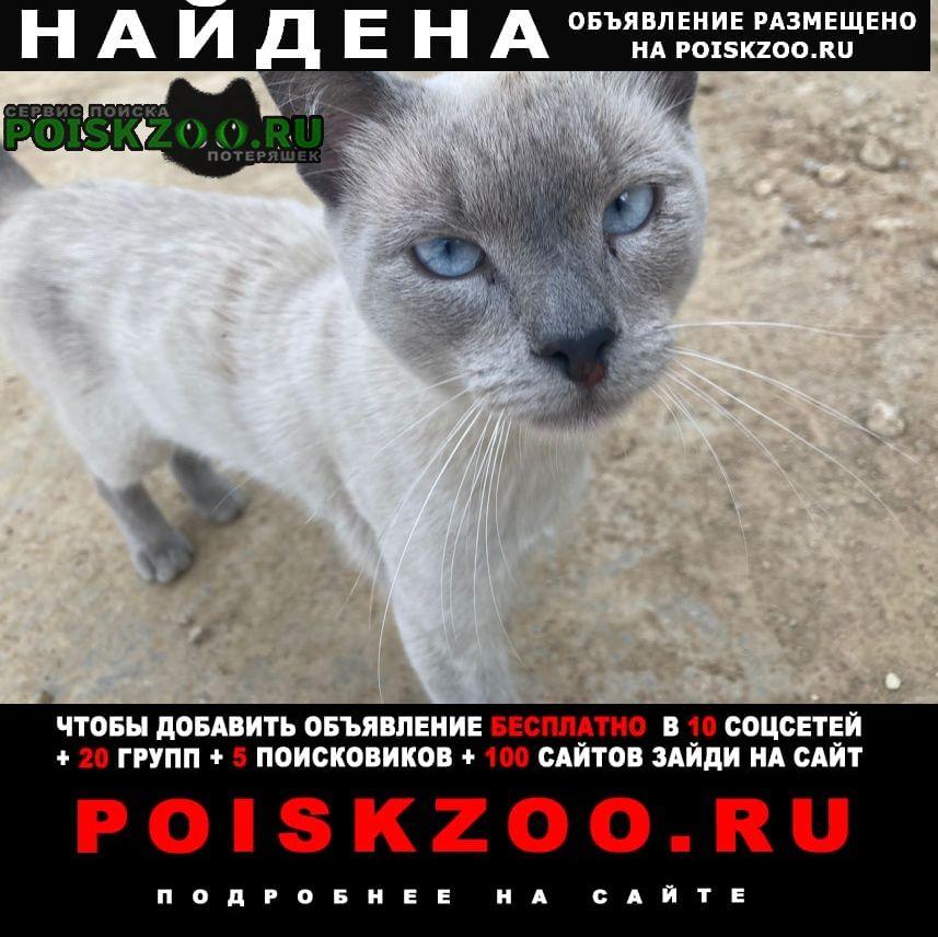 Найден кот, в районе бутово- коммунарка Москва