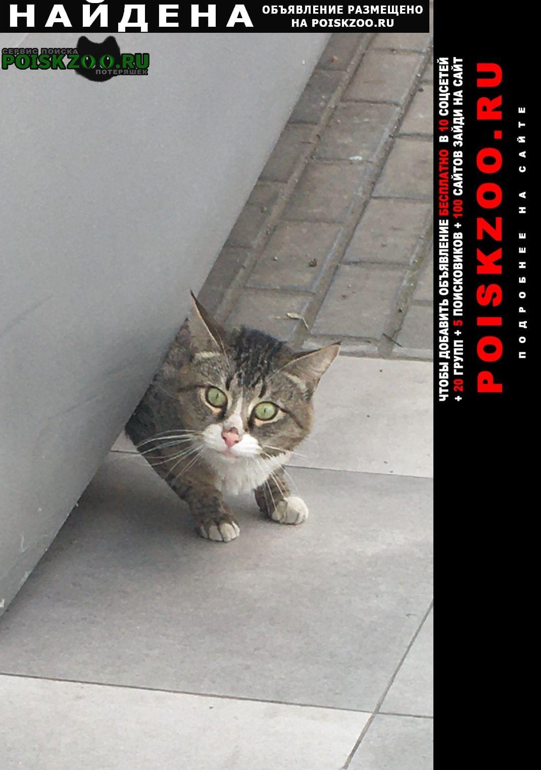 Найден кот или Москва