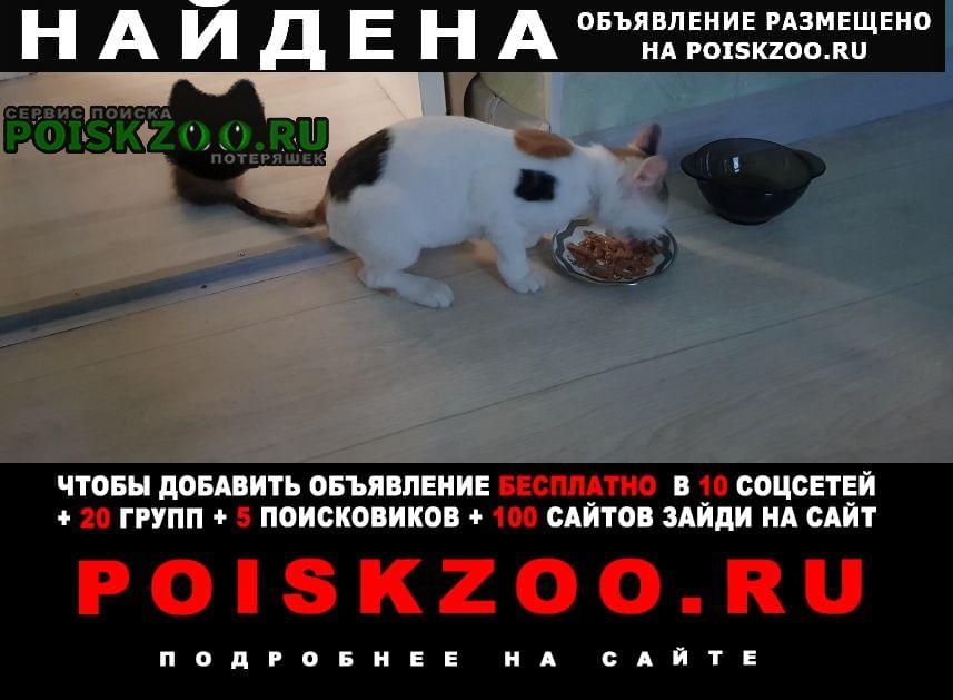 Найдена кошка щукино р-он, после операции. Москва