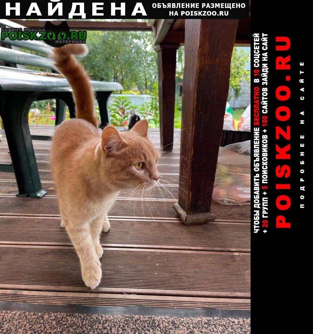 Найден кот или Чехов
