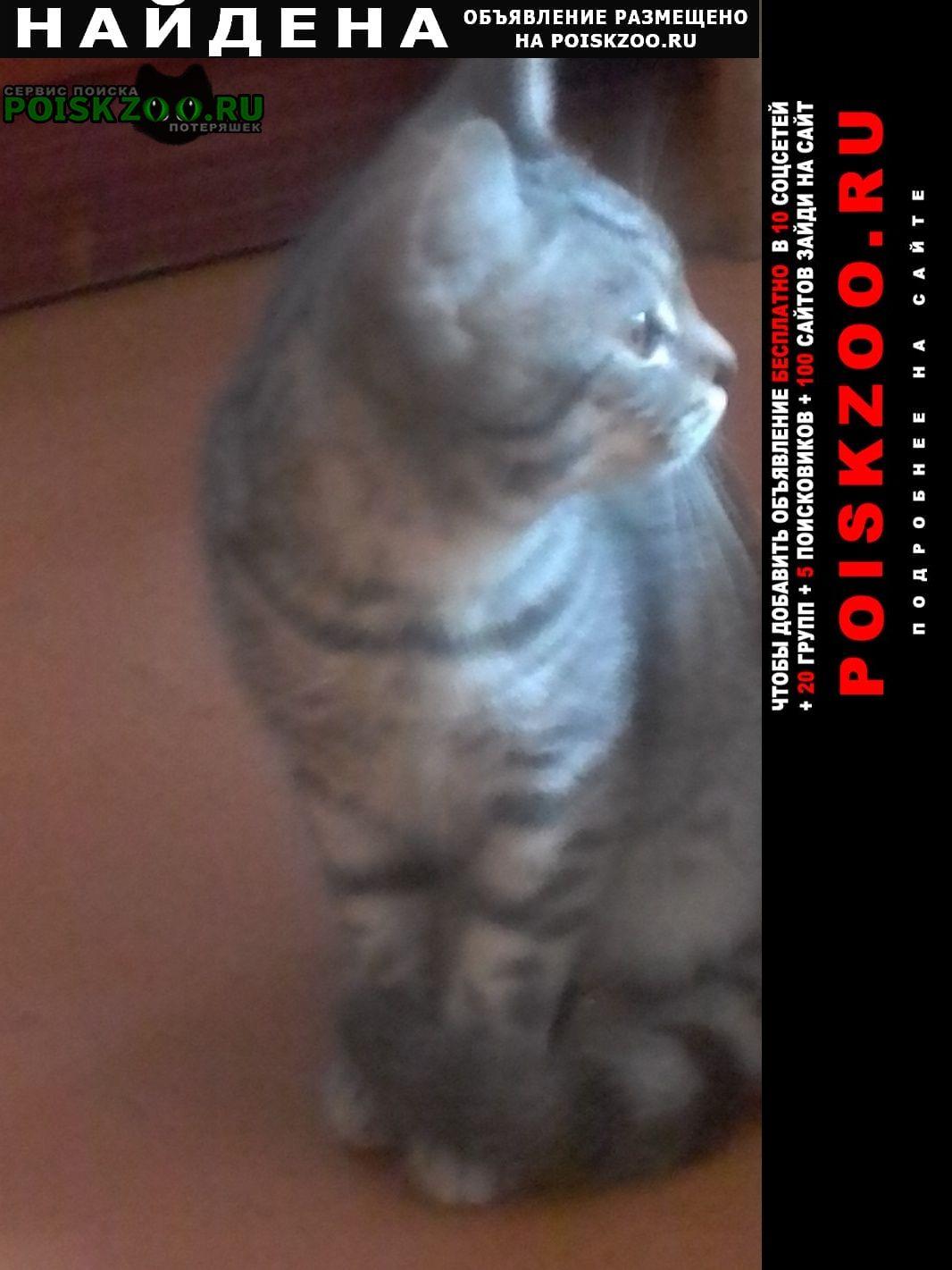 Найден кот Астрахань
